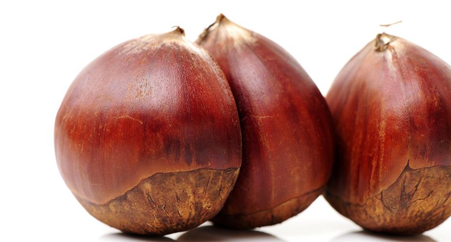 chestnut-ranking-2